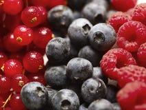 Frutta di bacca Fotografie Stock