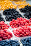 Frutta di bacca Immagini Stock