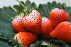 Frutta di bacche della fragola con le foglie verdi Fotografie Stock