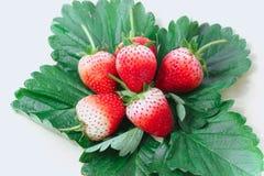 Frutta di bacche della fragola con le foglie verdi Immagine Stock