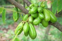 Frutta di Bilimbi Fotografia Stock Libera da Diritti