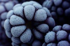 Frutta di Blackberry congelata Fotografia Stock