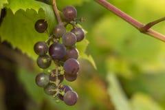 Frutta di colori verdi Fotografia Stock Libera da Diritti