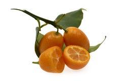 Frutta di Cumquat del kumquat sulla fine bianca isolata del fondo su immagine stock libera da diritti