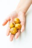 Frutta di Duku in palma Fotografia Stock