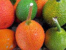 Frutta di Gac Fotografia Stock