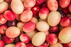 Frutta di Karanda Fotografia Stock Libera da Diritti