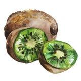 Frutta di kiwi fresca isolata su priorità bassa bianca immagine stock