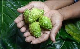 Frutta di Noni Fotografia Stock Libera da Diritti