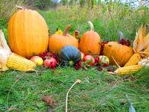 Frutta di ottobre Immagini Stock Libere da Diritti