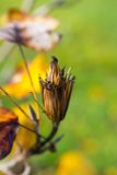 Frutta di pianta legnosa Fotografie Stock