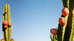 Frutta di Pitahaya Immagini Stock Libere da Diritti