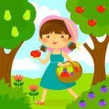 Frutta di raccolto della ragazza Immagine Stock Libera da Diritti
