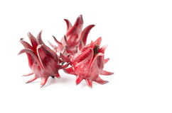 Frutta di rosella isolata immagini stock