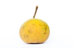 Frutta di Santo Fotografie Stock Libere da Diritti
