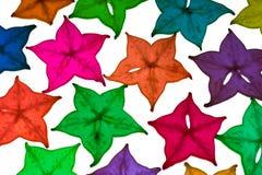 Frutta di stella variopinta su priorità bassa bianca Immagine Stock Libera da Diritti