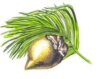 Frutta di un Coco de Mer illustrazione di stock