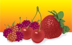 Frutta di vettore Immagini Stock