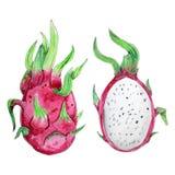 Frutta dipinta a mano dell'acquerello isolata su backround bianco royalty illustrazione gratis