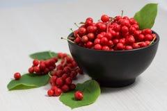 Frutta e bacche chinensis di Schisandra Fotografie Stock