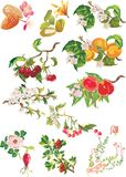 Frutta e fiori maturi Fotografie Stock Libere da Diritti