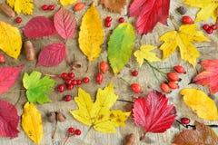 Frutta e foglie di autunno di natura morta Fotografie Stock