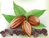 Frutta e grani del cacao Fotografie Stock