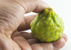 Frutta e mano del bergamotto isolate su fondo bianco Immagine Stock