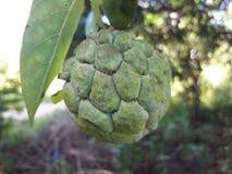 Frutta e permesso della natura Fotografie Stock