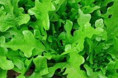 Frutta e vegetablens Fotografie Stock