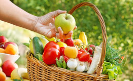 Frutta e verdure controllate della presa appena Immagini Stock