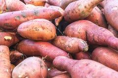 Frutta e verdure organiche nel mercato degli agricoltori: Wilson Park, T Immagine Stock