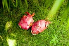 Frutta esotica del drago sul topview dell'erba all'aperto fotografie stock libere da diritti