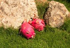 Frutta esotica del drago sull'erba con le pietre fotografia stock