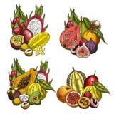 Frutta esotica e schizzi tropicali della bacca illustrazione vettoriale