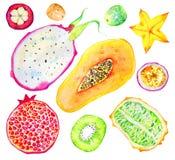 Frutta esotica Papaia, melograno, kiwi, pitahaya, frutto della passione, carambola, mangostano Insieme disegnato a mano dell'acqu illustrazione vettoriale