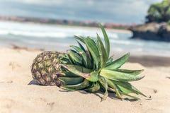 Frutta esotica tropicale fresca dell'ananas sulla spiaggia Isola di Parardise di Bali, Indonesia Immagini Stock
