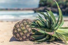Frutta esotica tropicale fresca dell'ananas sulla spiaggia Isola di Parardise di Bali, Indonesia Fotografia Stock Libera da Diritti