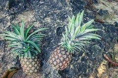 Frutta esotica tropicale fresca dell'ananas sulla spiaggia Isola di Parardise di Bali l'indonesia Immagine Stock