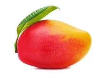Frutta fresca del mango con le foglie verdi isolate su fondo bianco Fotografia Stock