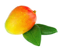 Frutta fresca del mango con le foglie verdi isolate su fondo bianco Immagine Stock