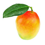 Frutta fresca del mango con le foglie verdi isolate su fondo bianco Immagini Stock Libere da Diritti