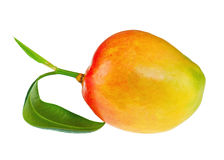 Frutta fresca del mango con le foglie verdi isolate su fondo bianco Fotografie Stock Libere da Diritti