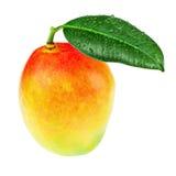 Frutta fresca del mango con le foglie verdi isolate su fondo bianco Fotografia Stock Libera da Diritti