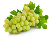 Frutta fresca dell'uva con i fogli verdi Immagini Stock