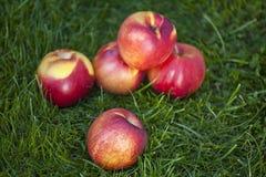 Frutta fresca della nettarina Fotografia Stock
