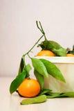 Frutta fresca delle arance del mandarino con le foglie Immagine Stock