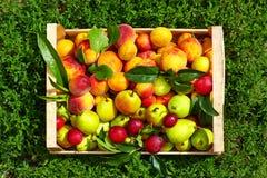 Frutta fresca di estate in cassa su erba Fotografia Stock