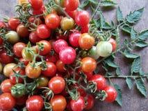 Frutta fresca e verdura del pomodoro ciliegia Fotografia Stock Libera da Diritti