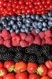 Frutta fresca in una fila Fotografia Stock